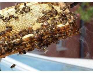 Des ruches à la résidences Prosper MATHIEU