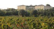 Résidence au milieu des vignes
